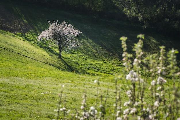 Schöne ansicht eines blühenden baumes in einem offenen feld neben einem hügel, der an einem sonnigen tag gefangen genommen wird