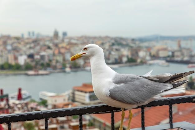 Schöne ansicht von oben auf die dächer von istanbul und den bosporus. wunderschöne landschaft.