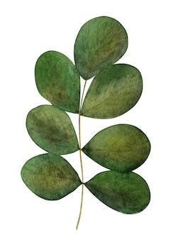 Schöne aquarellzeichnung von hellen blumen und grünen zweigen. nahaufnahme, keine leute, textur. herzlichen glückwunsch an die lieben, verwandten, freunde und kollegen