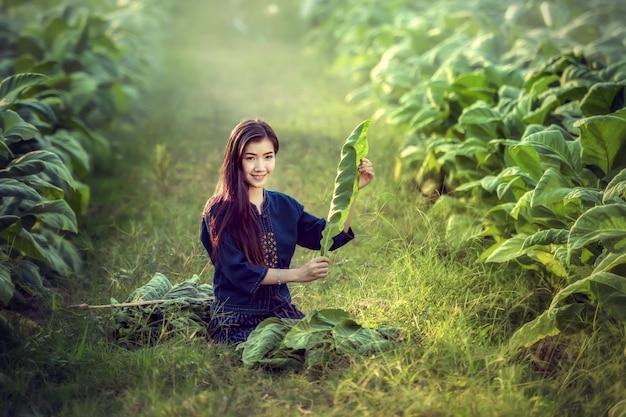 Schöne asiatische frauen, die tabak pflücken, um als rohstoffe weiter verwendet zu werden