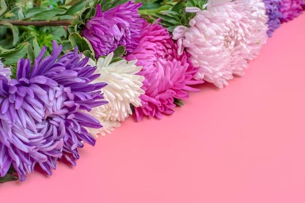 Schöne asterblumen auf pastellrosa-farbhintergrund. flach legen