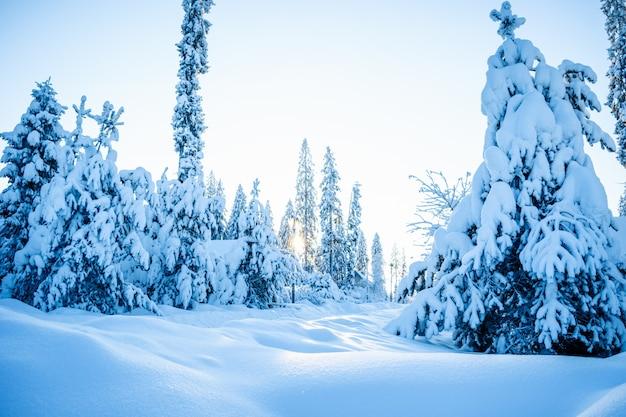Schöne atmosphärische winterlandschaft. schneebedeckte bäume im wald im sonnenlicht.