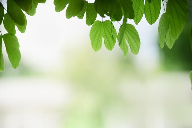Schöne attraktive naturansicht der nahaufnahme des grünen blattes auf unscharfem grünhintergrund im garten mit kopienraum