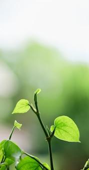 Schöne attraktive naturansicht der nahaufnahme des grünen blattes auf unscharfem grünhintergrund im garten