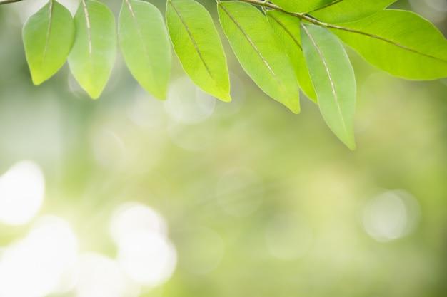 Schöne attraktive naturansicht des grünen blattes auf unscharfem grün im garten mit kopienraum, der als natürliche grüne pflanzenlandschaft, ökologie, frisches tapetenkonzept verwendet.