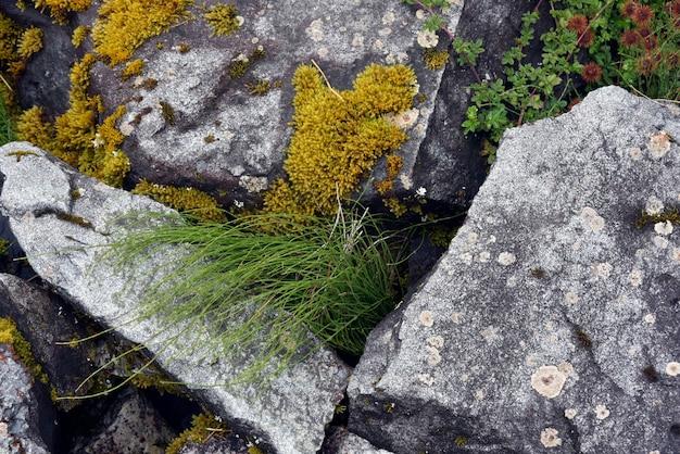 Schöne aufnahme der gräser und des moos auf den steinen