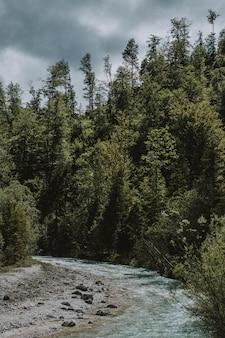Schöne aufnahme der landschaft des sees und des waldes mit grün