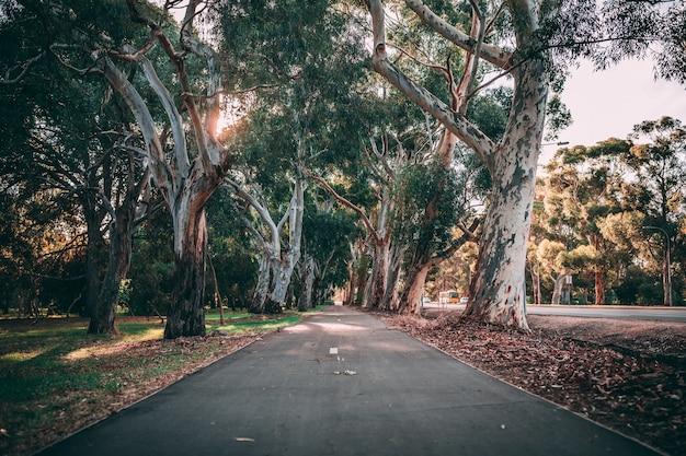 Schöne aufnahme des parkweges umgeben von erstaunlicher natur