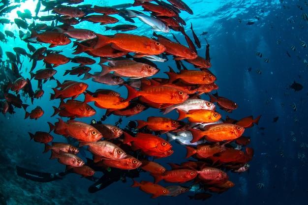 Schöne aufnahme des unterwasserlebens der malediven
