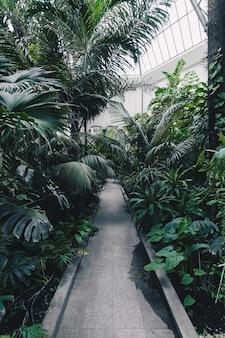 Schöne aufnahme eines botanischen gartens mit exotischen tropischen pflanzen und bäumen