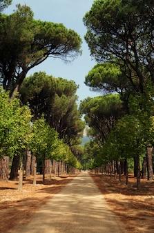 Schöne aufnahme eines gehwegs in einem park, der von bäumen umgeben ist