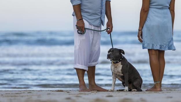 Schöne aufnahme eines paares am strand mit blauem englischem stafford-hund