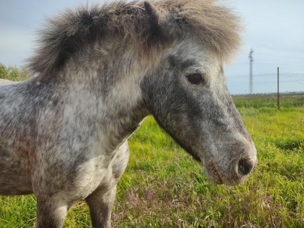 Schöne aufnahme eines pferdes auf einem sonnigen feld