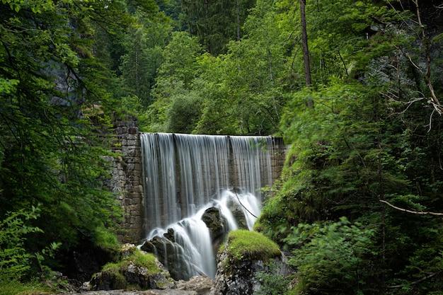 Schöne aufnahme eines wasserfalls, umgeben von grünblättrigen bäumen und pflanzen im wald