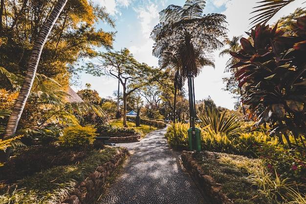 Schöne aufnahme eines weges in der mitte von bäumen und pflanzen am tag in madeira, portugal