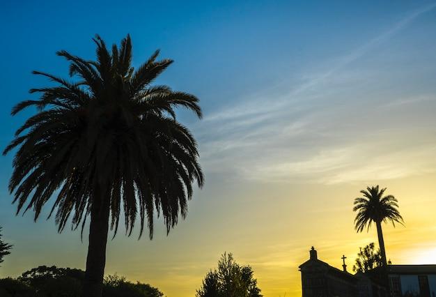 Schöne aufnahme von attalea-bäumen mit einer kirche in der ferne unter einem gelben und blauen himmel