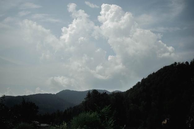 Schöne aufnahme von bäumen und einem bewaldeten berg in der ferne an einem wolkigen tag