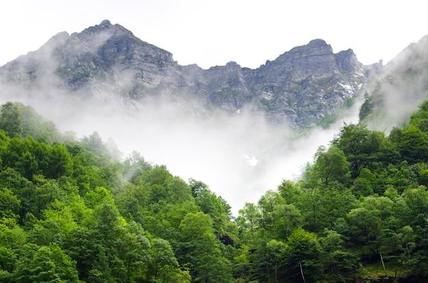 Schöne aufnahme von bergen und wäldern in der schweiz