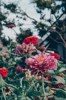 Schöne aufnahme von blumen und pflanzen in einem garten