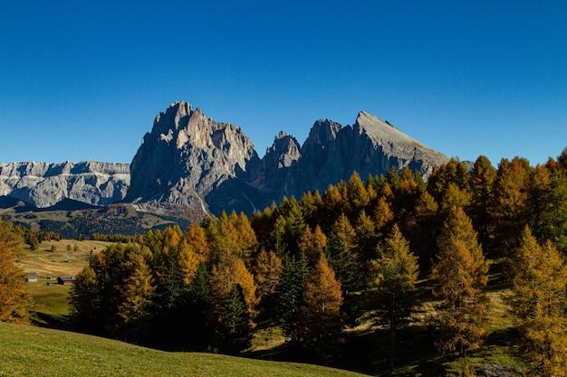 Schöne aufnahme von grünen bäumen und berg in der ferne in dolomit italien