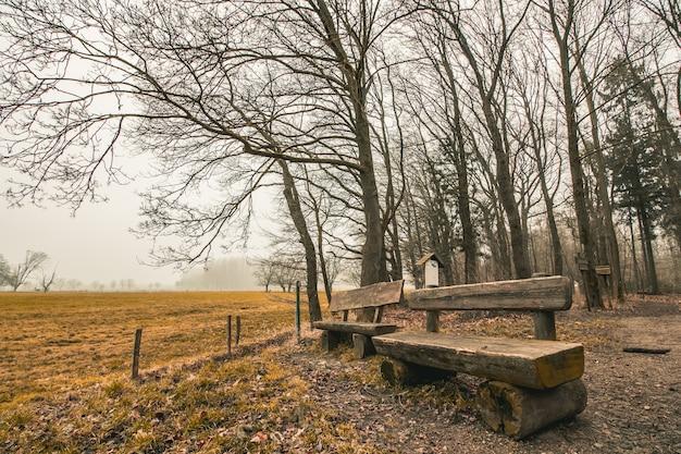 Schöne aufnahme von holzbänken in einem waldpark mit einem düsteren himmel im hintergrund