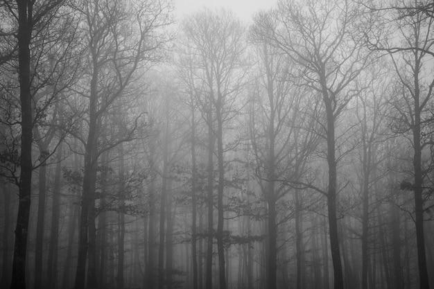 Schöne aufnahme von vielen blattlosen bäumen, die am frühen morgen mit nebel bedeckt sind