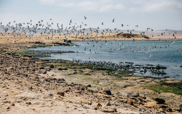 Schöne aufnahme von vögeln, die unter blauem himmel über einen see und ein ufer fliegen