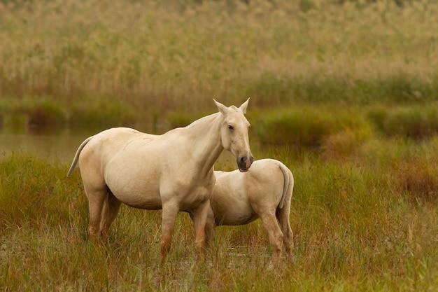 Schöne aufnahme von zwei pferden auf einem feld