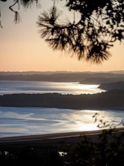 Schöne aussicht auf das meer durch die fichtenzweige bei sonnenaufgang.