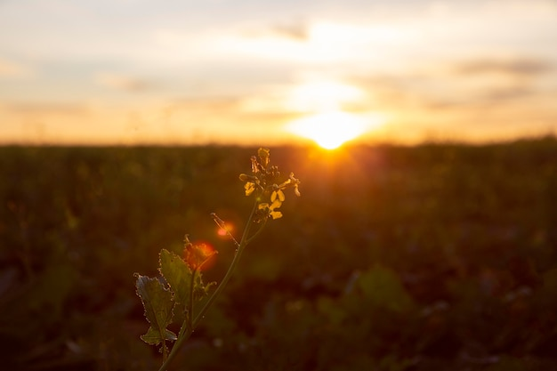 Schöne aussicht auf das morgenlicht