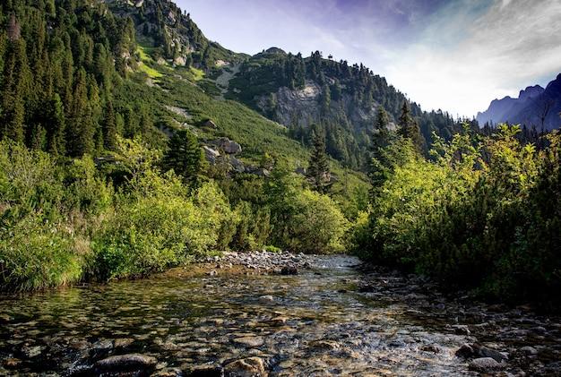 Schöne aussicht auf den bergfluss im sommer