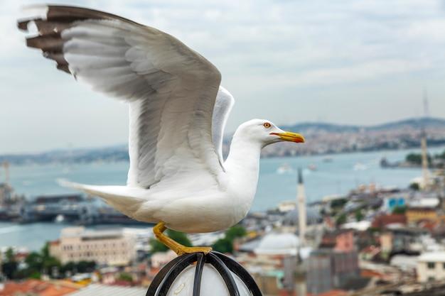 Schöne aussicht auf den bosporus und die stadt