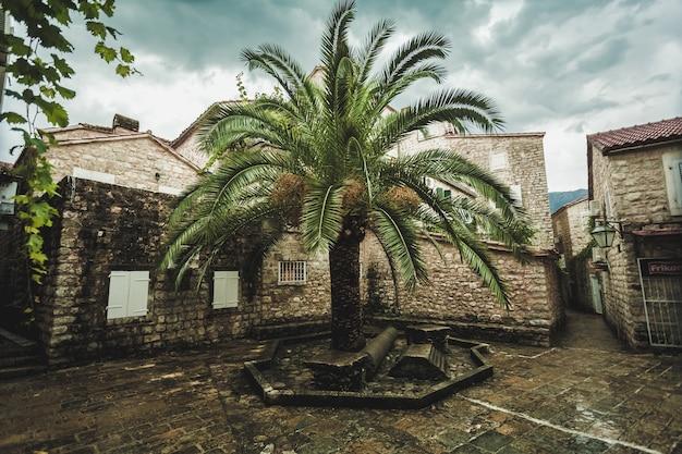 Schöne aussicht auf die große palme, die zwischen alten engen gassen wächst?