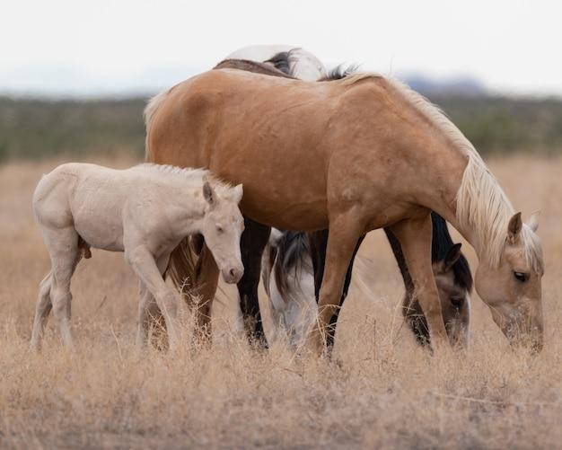 Schöne aussicht auf die gruppe der pferde auf dem feld
