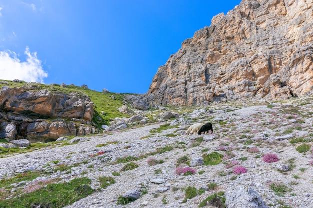 Schöne aussicht auf die idyllische berglandschaft.