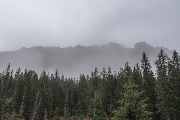 Schöne aussicht auf die tatra im nebel herbsttag