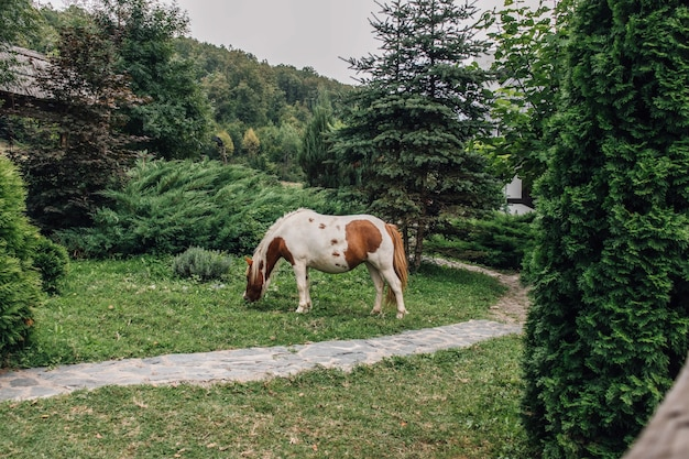 Schöne aussicht auf ein pferd, das gras im garten weidet