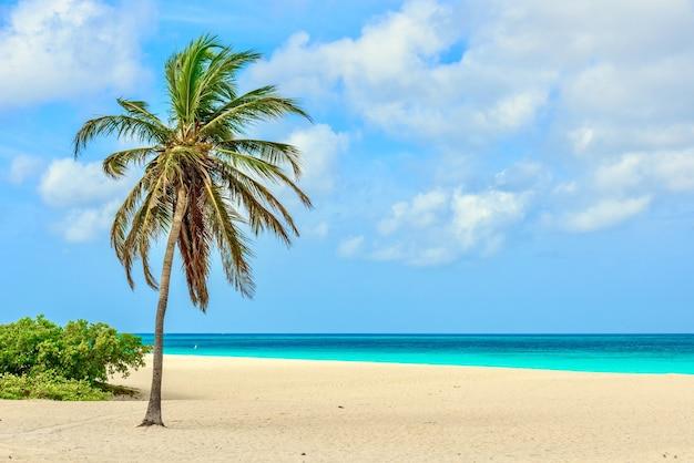 Schöne aussicht auf eine palme am idyllischen weißen sandstrand von eagle beach in aruba