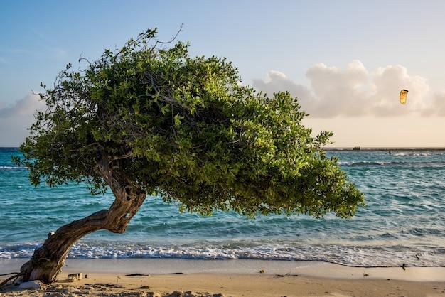 Schöne aussicht auf einen divi divi-baum an der küste des tropischen strandes von aruba