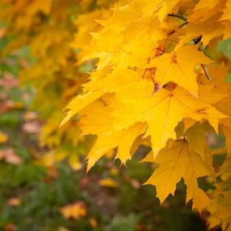 Schöne aussicht auf helle herbstblätter im park