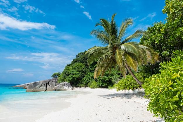 Schöne aussicht mit blauem himmel und wolken, blauem meer und weißem sandstrand mit kokosnussbaum auf similan