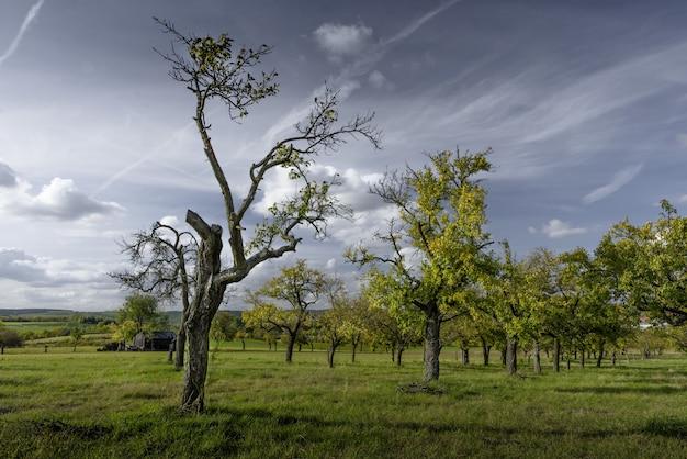 Schöne bäume auf einem feld bedeckt mit gras mit dem bewölkten himmel