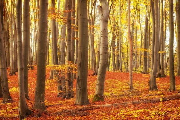 Schöne bäume im park oder wald im herbst