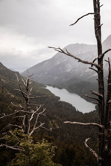Schöne bergwaldlandschaft