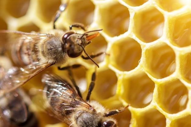 Schöne bienen auf bienenwaben mit honig nahaufnahme