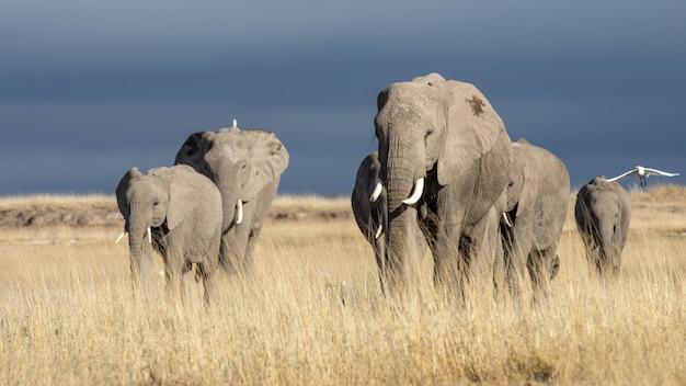 Schöne bilder von afrikanischen elefanten in afrika