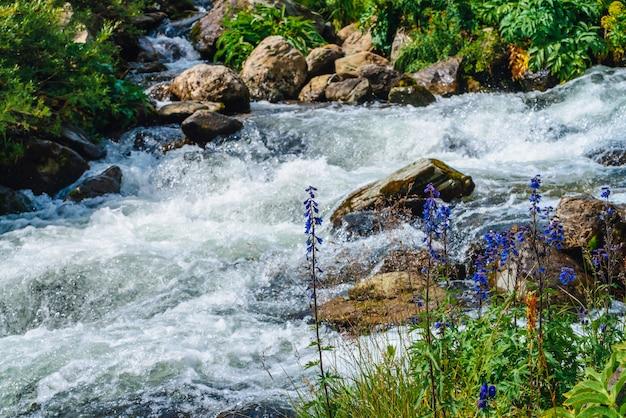 Schöne blaue blumen nähern sich gebirgsbach