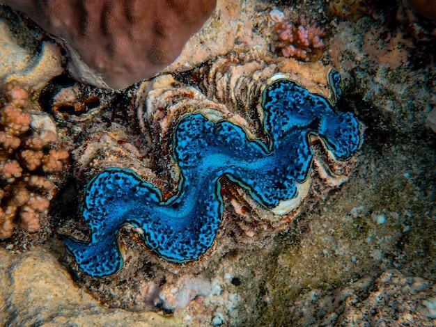 Schöne blaue koralle am grund des meeres