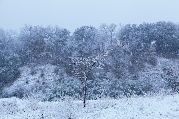 Schöne blaue landschaft eines mit schnee bedeckten parks