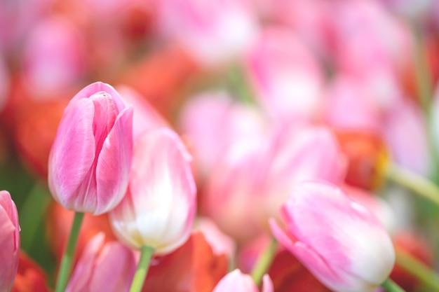 Schöne blühende blumen im garten